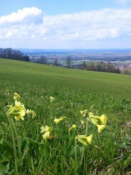 Ausblick auf das Alpenvorland bei Wiesholzen.