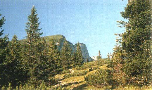 Die Gipfelfelsen des Untersbergs vom Reisenkaser