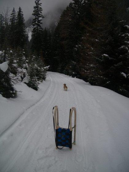 Bei der Rodelbahn handelt es sich durchgehend um eine breite Forststraße.