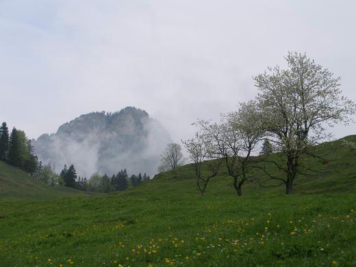 Im Almgebiet oberhalb des Kranzhorn-Parkplatzes: Blick auf den Heuberg.