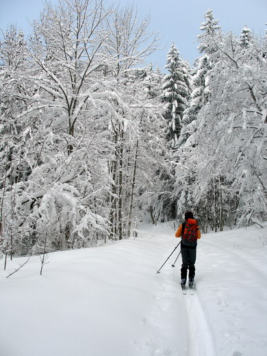 So schön ist es für Schneeschuh- und Skitouren-Geher auf dem Weg zur Riesenhütte: Hier auf dem Foto recht flach, manchmal auch mal ein klein wenig steiler, aber nie zu schwierig.
