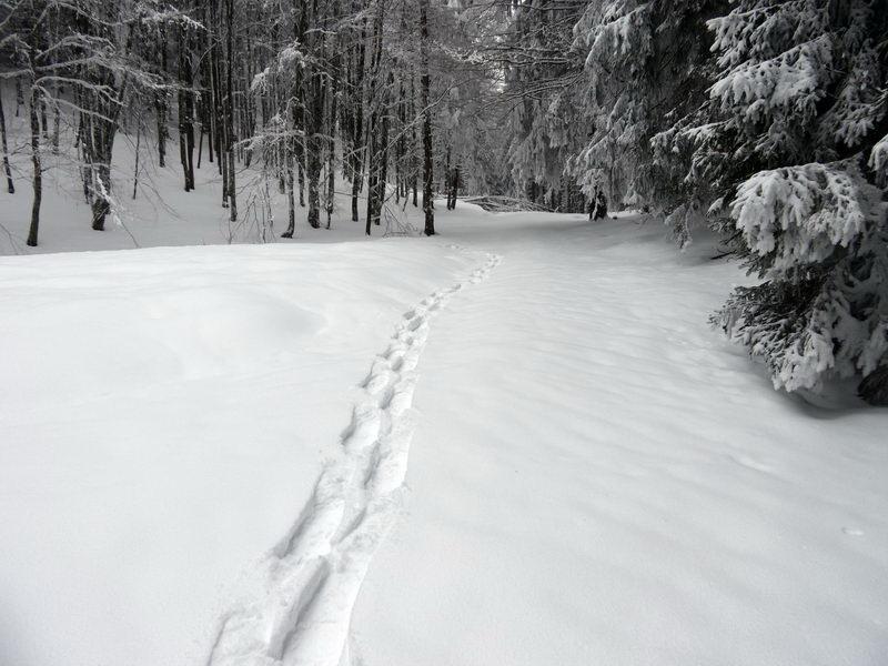 Der Weg führt meist über verschneite Forststraßen