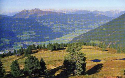 Almrosenmatten, geschmückt mit Bergaugen, oberhalb der Brunnalm