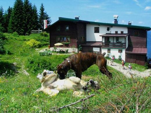 Das Weinbergerhaus - Wanderer, Bergsteiger und Hunde sind hier immer herzlich Willkommen.