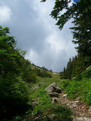 Weg oberhalb der Seeonalm