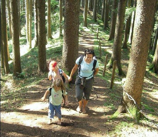 Weicher Waldboden – ideal zum Barfußwandern.Foto: Copyright Eduard und Sigrid Soeffker