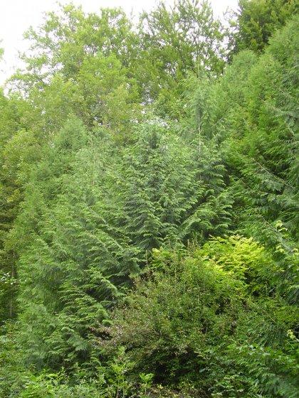 Der genaue Beobachter erkennt: hier handelt es sich nicht um einen gewöhnlichen Wald