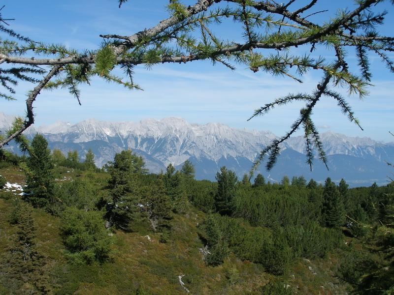 Blick über den Zirbenwald zum Karwendelgebirge