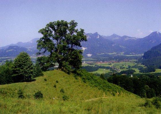 Eine markante alte Linde steht an aussichtsreicher Stelle mitten in den Trockenrasen.