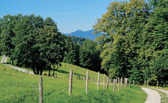 Wiesen- und Weidenidyll unterhalb des Rötelsteins
