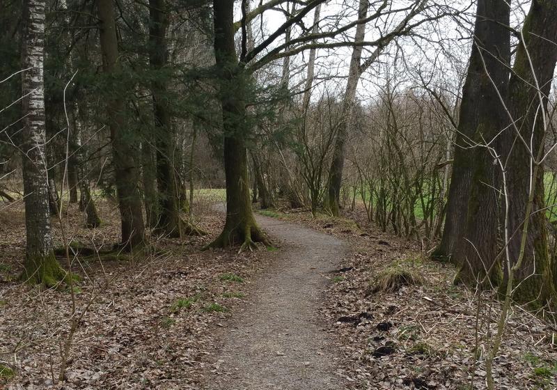 Meist bewegen wir uns auf angenehmem weichen Waldboden