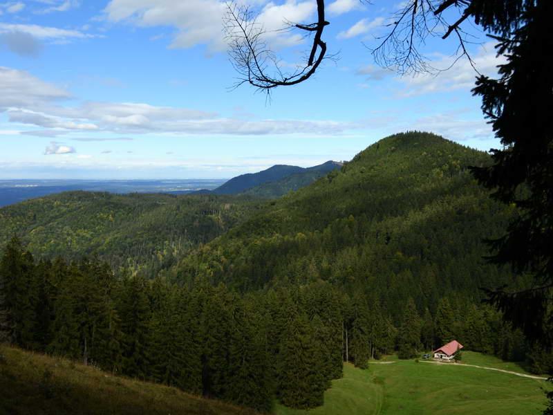 Die Orterer Alm liegt, umgeben von dichten Bergwäldern, inmitten eines grünen, sonnigen Kessels.