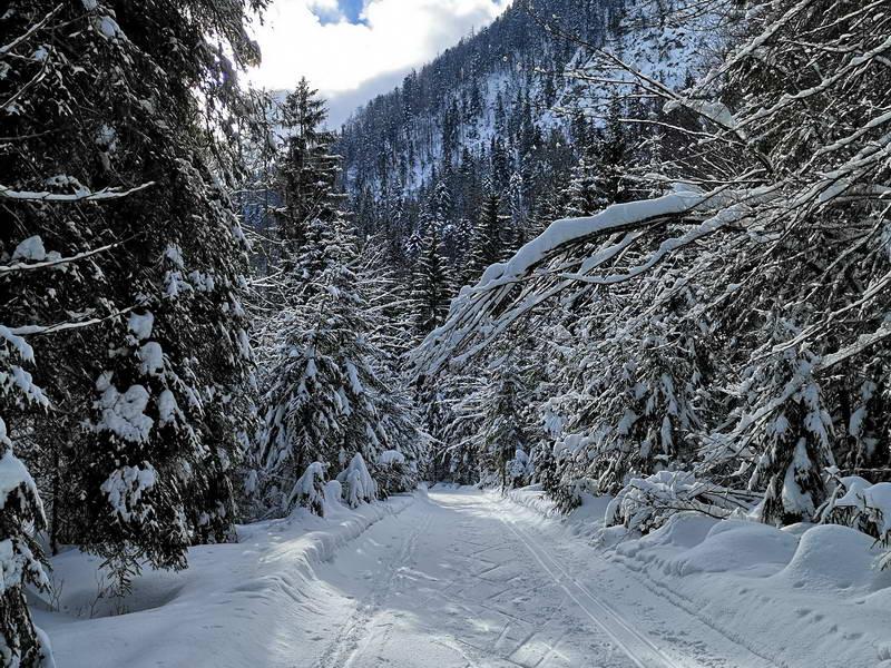 Im letzten Drittel vor Griesenau verläuft die Loipe durch einen verschneiten winterlichen Wald.