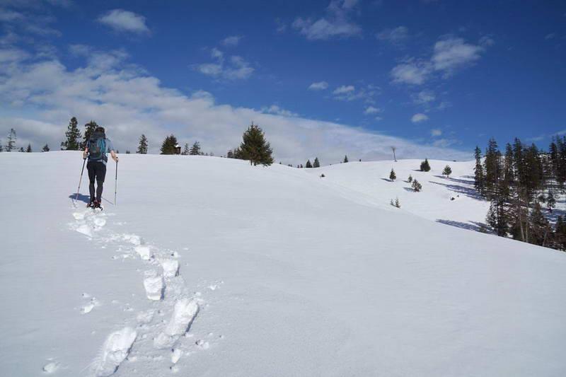 Kurz vor dem Ziel: Rechts sieht man bereits die Gipfelfläche des Ameiskogel.
