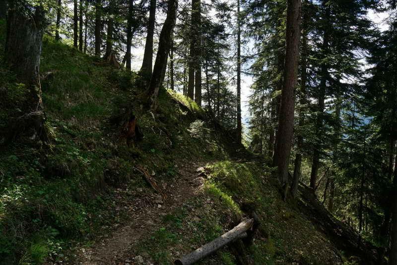 Der romantische Jägersteig führt meist durch schattigen Mischwald. Foto (c) MANAL
